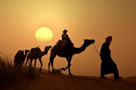 Sunset Camel Ride in the Palm Grove...