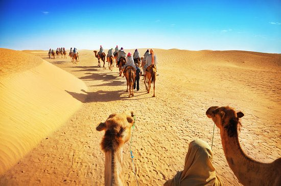 Desert Safari from Dubai with Camel...
