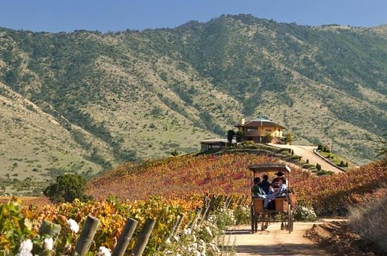 サンチャゴからのColchagua Valley Winery Day Tr…