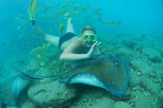 Snorkle med Stingrays og Feed Sharks...