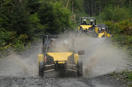 Alaskan Wilderness Off-Road Tour from...