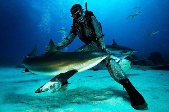 Grand Bahama Shark Dive
