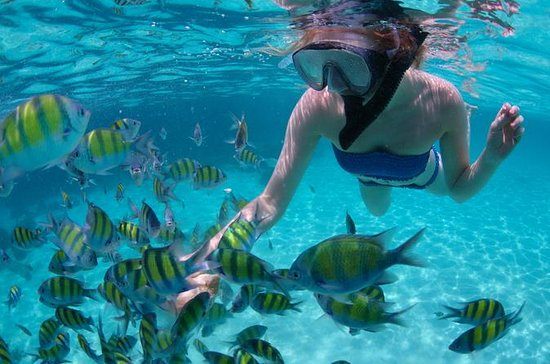 Freeport Peterson Cay Park Snorkeling...
