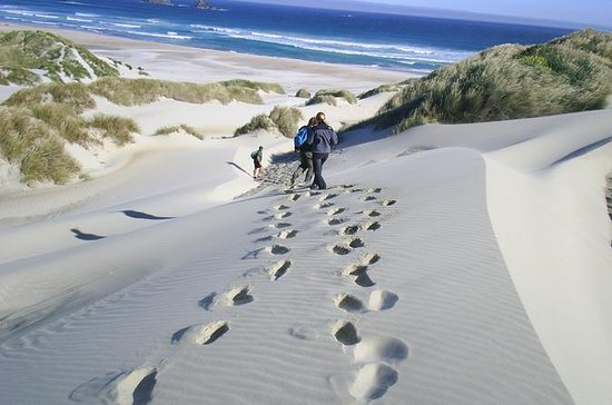 Otago Peninsula Coastal Walking Tour...