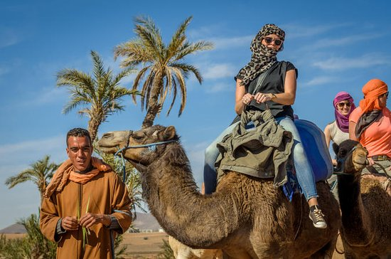 Desert, Palm Grove Camel Ride from...