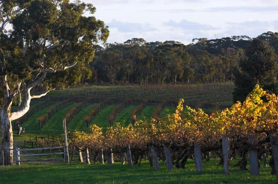 Barossa Valley with Hahndorf Tour from...