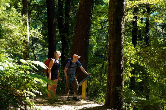 Self-Guided Queen Charlotte Track ...
