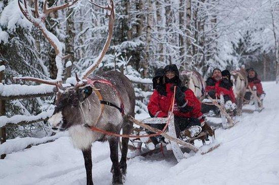 Northern Lights Reindeer Experience...