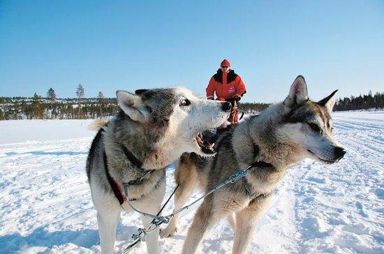 Safari en motonieve en Laponia a una...