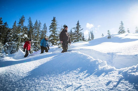 Whistler Snowshoeing Adventure with...
