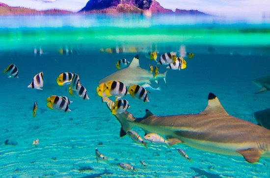 Full-Day Bora Bora Lagoon Cruise Including Snorkeling with Sharks and...