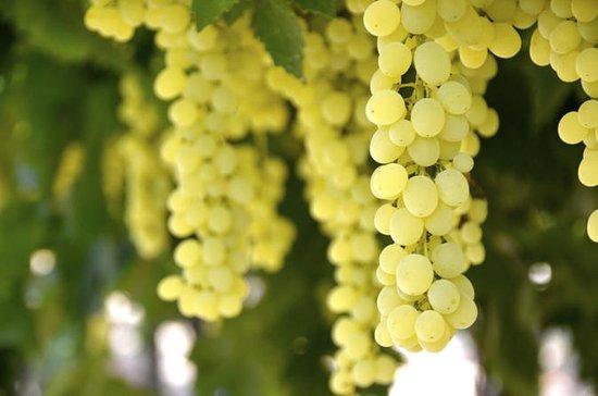 ソムリエとソムリエのプライベートイルピニアワインツアー