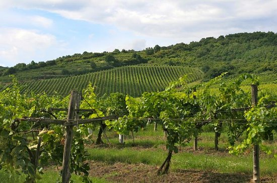 Tokaj Wine Country Day Trip from...