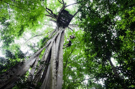 Chiang Mai Rainforest Canopy Zipline Adventure