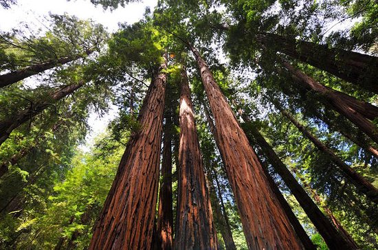 Muir Woods and Sausalito Tour Afternoon...
