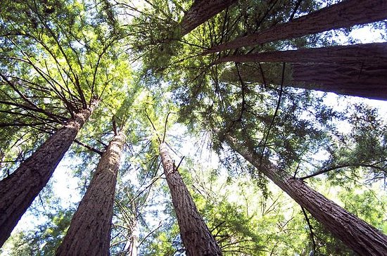 Muir Woods Tour of California Coastal...