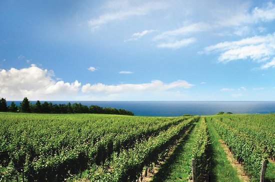 Konzelmann Estate Winery Tour ...
