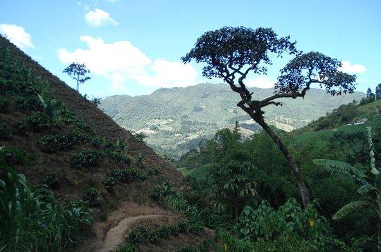 プライベートツアー:メデインのコーヒー体験とワークショップ