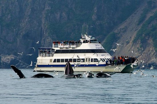 Kenai Fjords Glacier and Wildlife ...