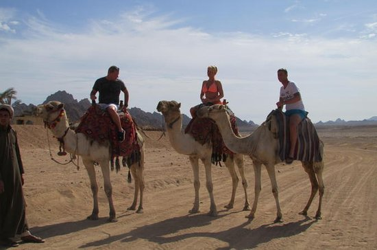 Safari in cammello a Sharm El Sheikh