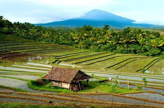 Excursión de un día al norte de Bali