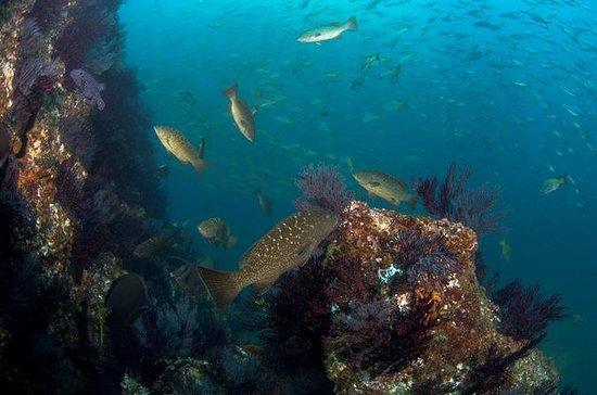 3-Tank Cabo San Lucas e inmersiones...