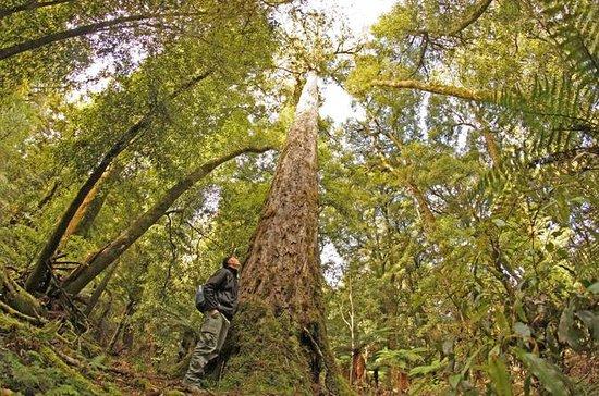 Full Day Hiking in Whirinaki forest