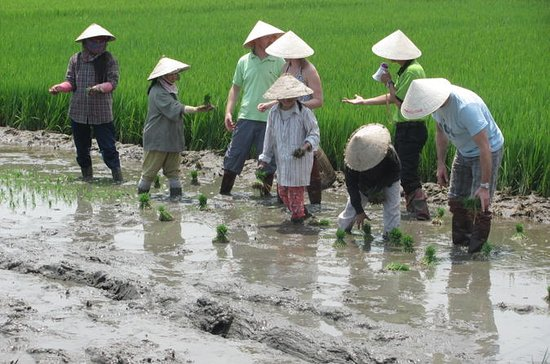 Agricultural Tour in Hoi An
