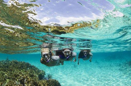 Tour de buceo de superficie en Panamá