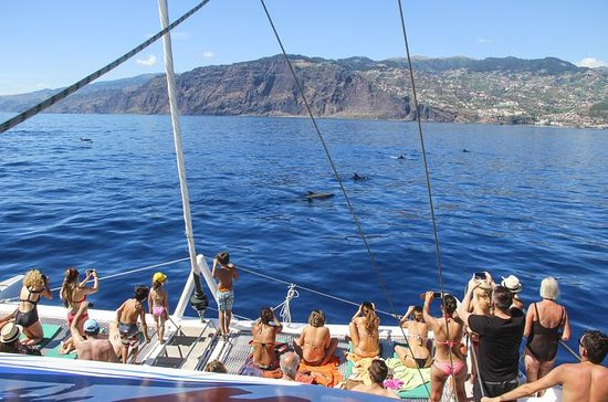 Funchal Dolphin and Whale Watching...