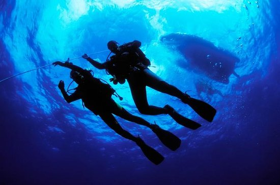 PADI Open Water Diver Certification ...
