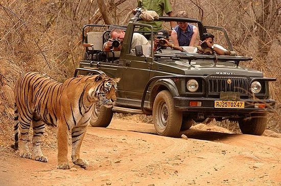 Private Tour: 2-Day Ranthambore...