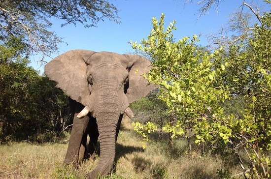 2 Night Elephant Tour from Nelspruit