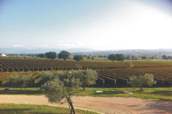 Private Tuscany Wine Tour Experience ...
