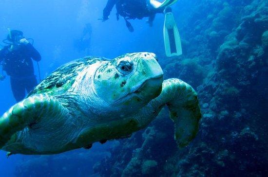 Plongée sous-marine sur l'épave du S...