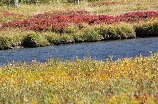 Yellowstone Lower Loop Self Guided...