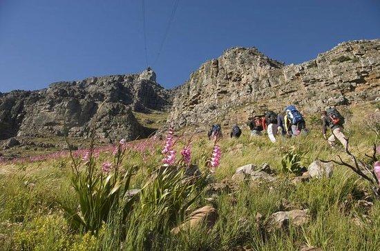 Privat Vandringstur på Table Mountain