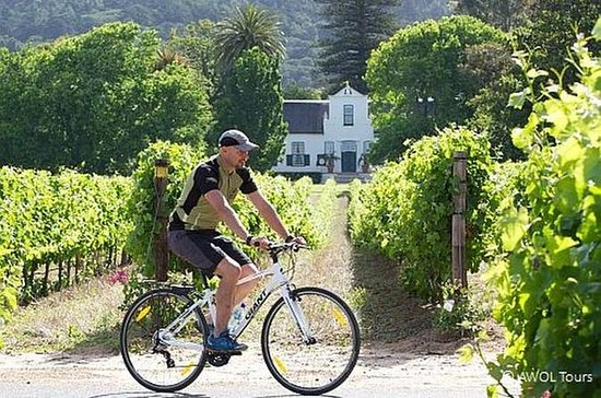 Private Cycling Tour of Constantia...