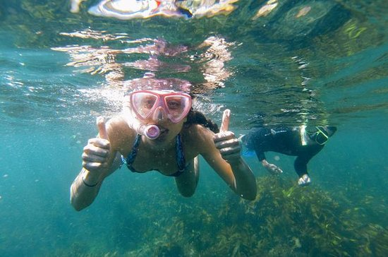 Manly Snorkeling Tour y Nature Walk