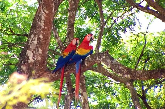 Private Tour: Carara National Park...