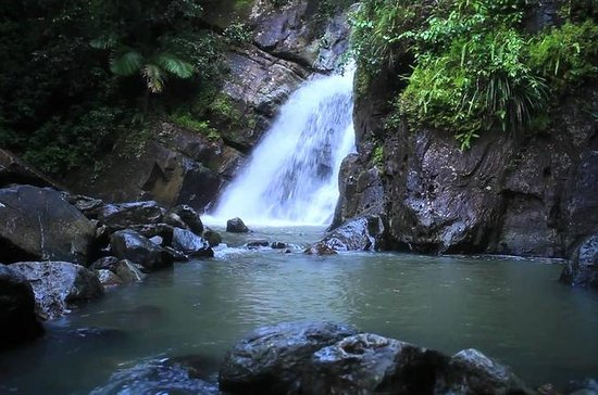 El Yunque Rainforest Guided Hiking Eco-Tour with Waterfall