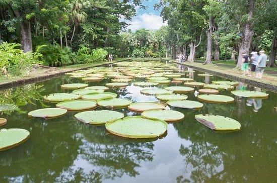 Mauritius Private North Day Tour: Botanical Garden - Sugar Museum...