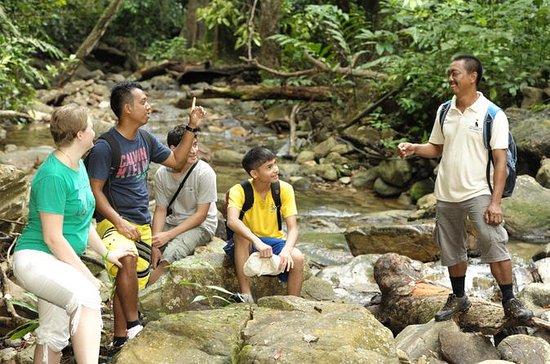 Halbtägige Dschungeltour ab Langkawi