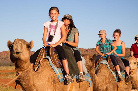 Tour Camel de Alice Springs