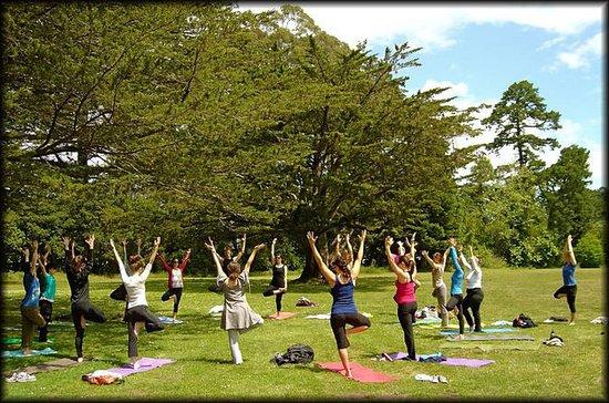 Yoga und Meditationserfahrung in...