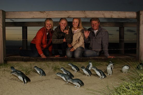 Phillip Island: Penguin Parade...