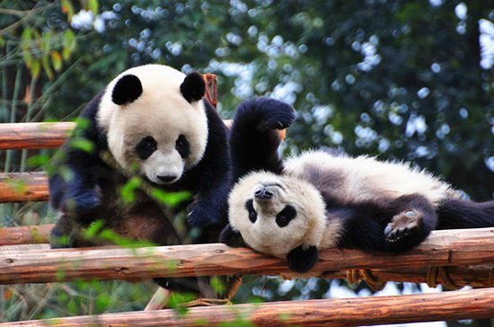 10-Day Best of China with Pandas...