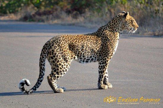 4-Day Kruger National Park Safari from Johannesburg