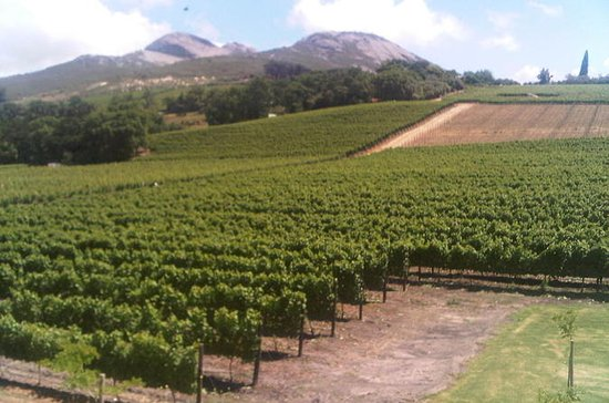 Cape Winelands with Stellenbosch...