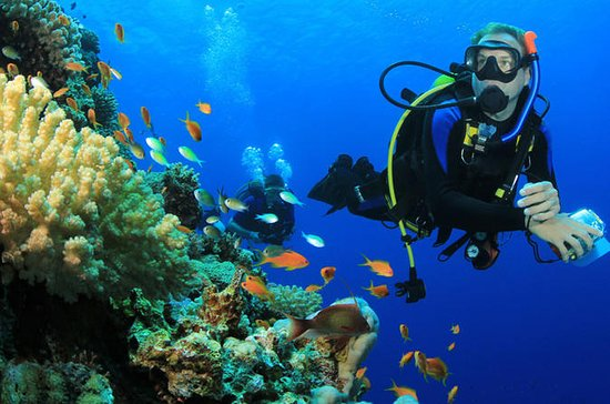 6 Dive Package at Ras Mohamed and...